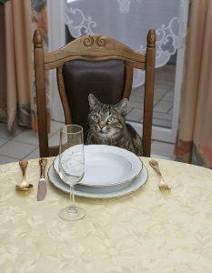 Katze sitzt am Tisch