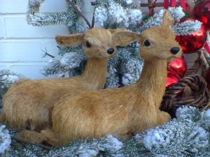 Weihnachten bei Tiernahrung Bergmann