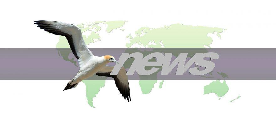 Tiernahrung Bergmann Blog News